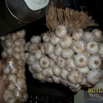 Garlic from Batanes and Garlic from Ilocos