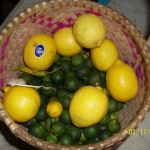 Yellow Lemons and Green Calamansi